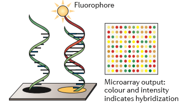 microarray2.png